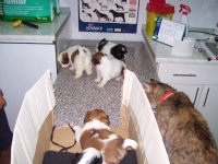 Cabinet veterinar Animalia