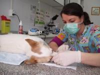 Stomatologie veterinara