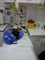 Ingrijiri veterinare