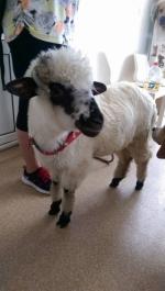 Clinică veterinară dedicată tuturor animalelor