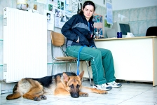 Consultatii veterinare Medivet Bogdan