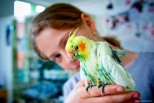 Tratamente si consultatii pentru orice animal de companie