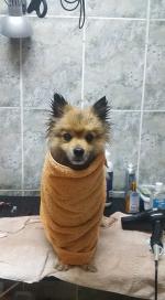 Toaletaj canin și felin