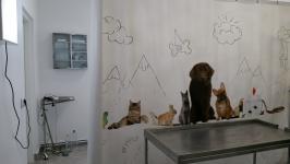 Consultatii si toaletaj animale de companie